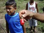 Einer der unzähligen mir völlig unbekannten brasilianischen Früchte.