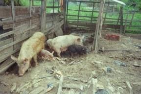 Viele der Bewohner halten Tiere.
